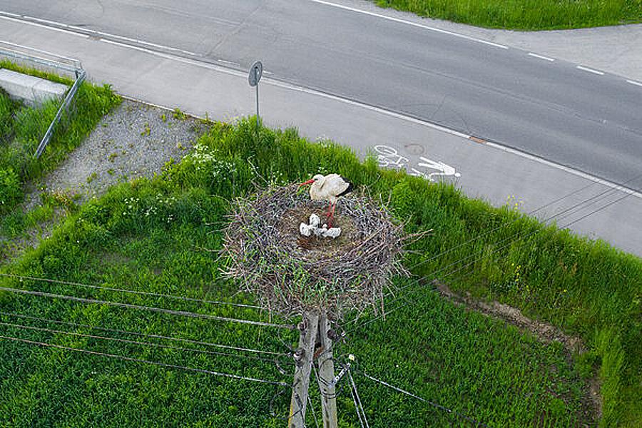 Pisklęta wykluły się w gniazdach przygotowanych przez TAURON